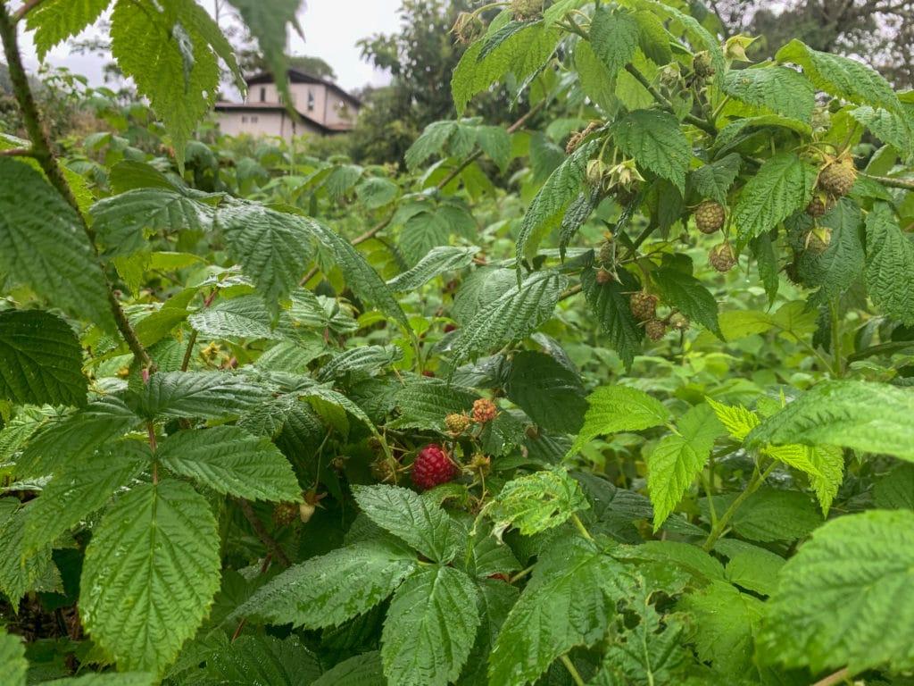 Olha essas frutas sem agrotóxicos