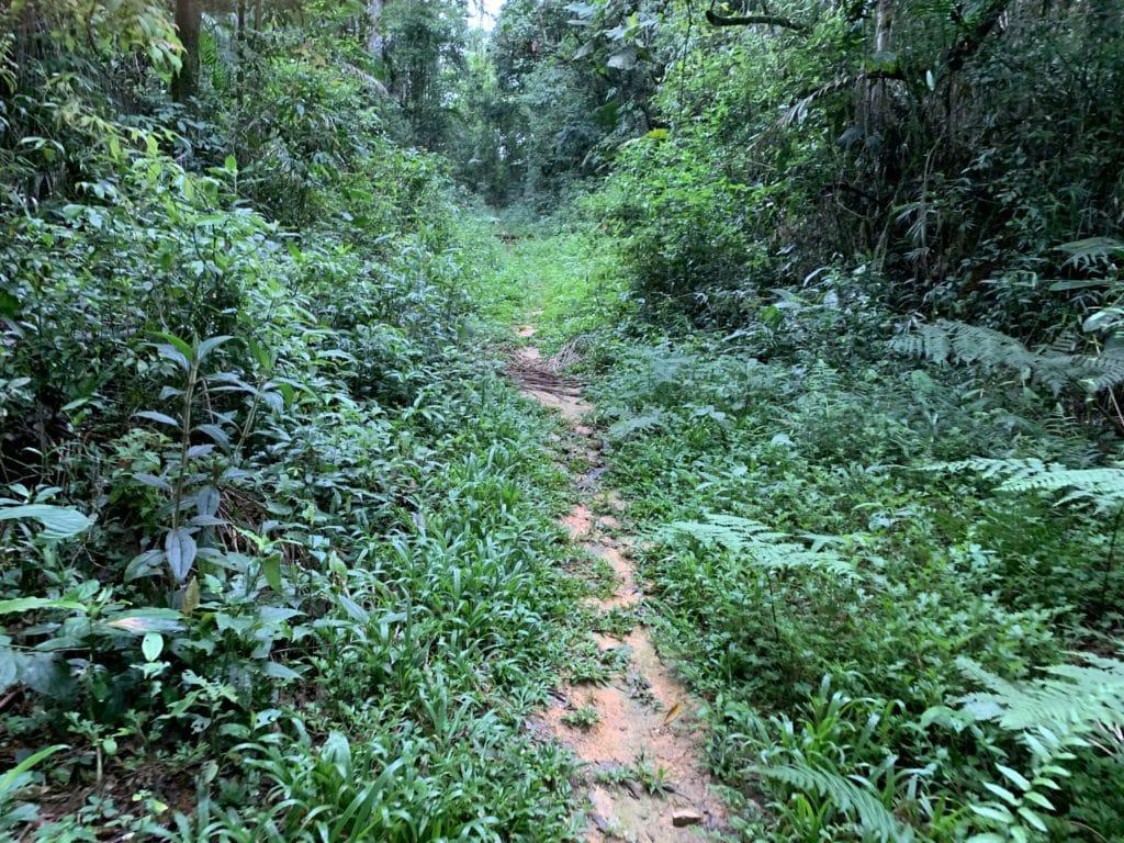 a trilha no inicio