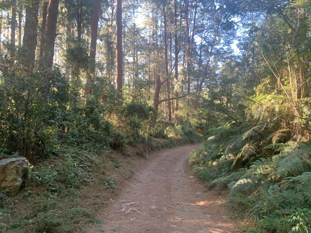 a trilha até a cachoeira de santo Isidro em São José do Barreiro