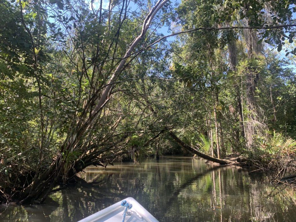 Caminho pelo mangue até a Cachoeira do Cleandro - Itacaré