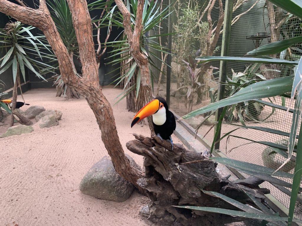 Tucano do Zoopark Itatiba