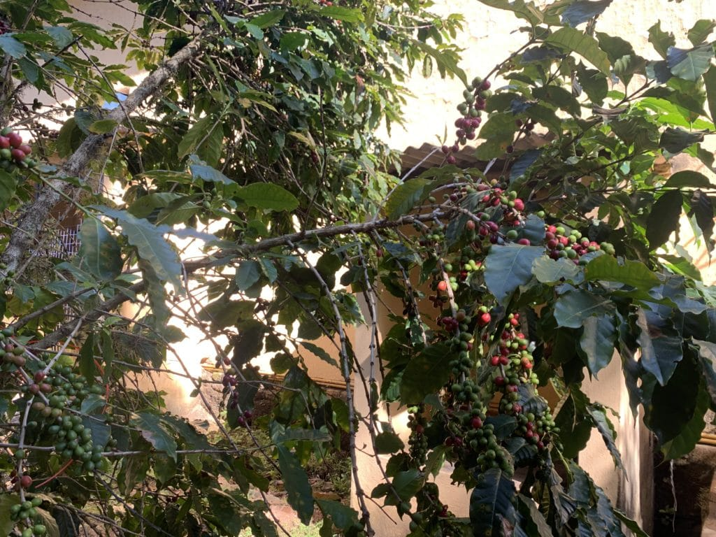 Fazenda Nossa Senhora da Conceição cafe