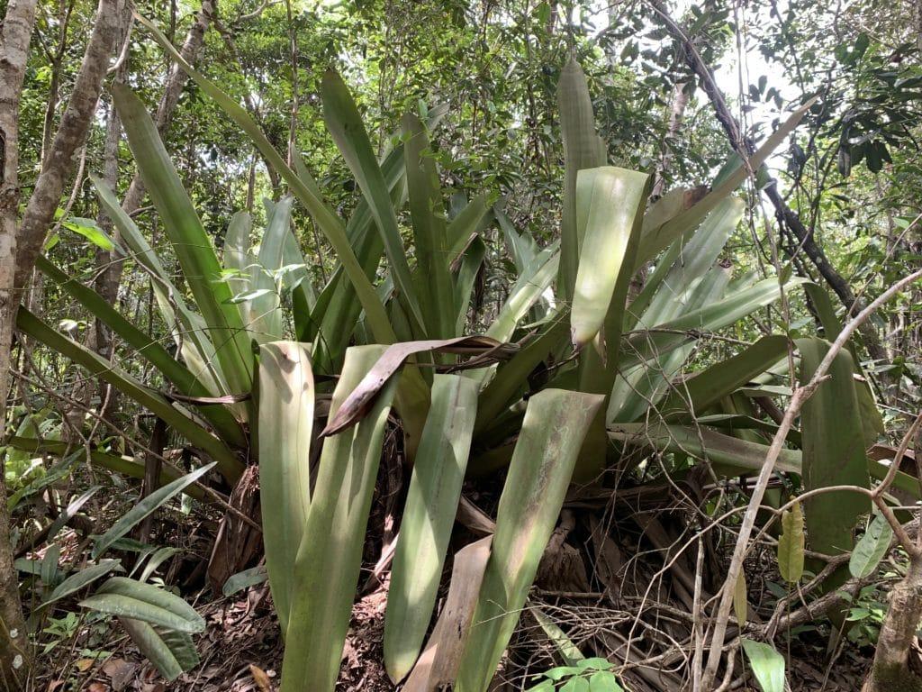 Rota das Bromélias, na Península de Maraú