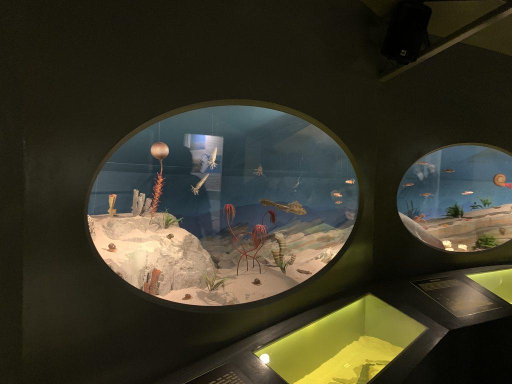 Primeiras espécies que habitaram o planeta em vários aquários