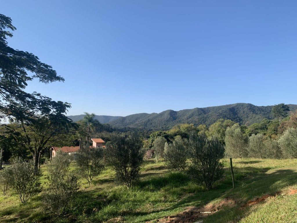 Queijaria Pé do Morro oliveiras